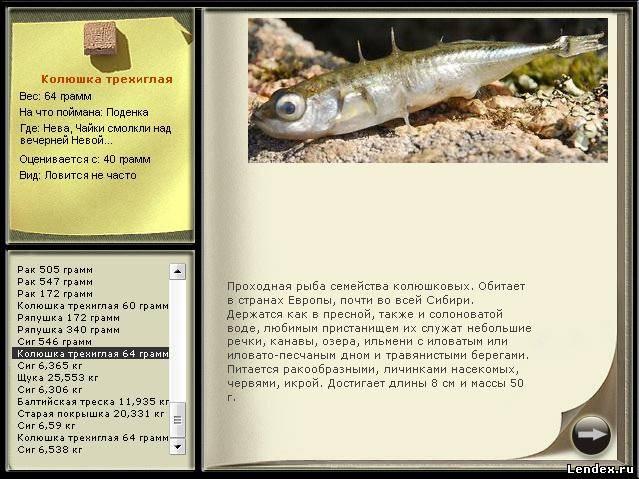 на что клюет рыба колюшка