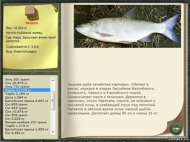 на какой глубине ловить рыбу на реке