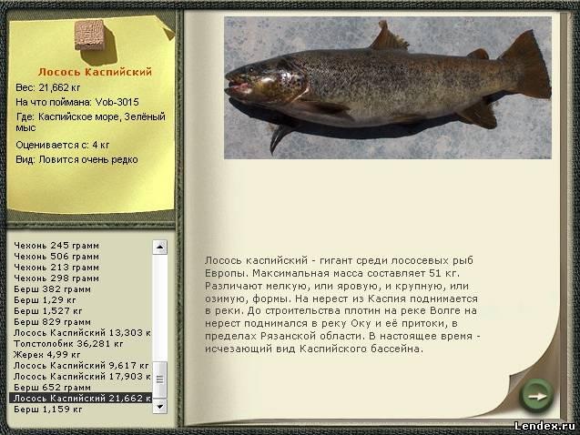 лосось рыба ловить
