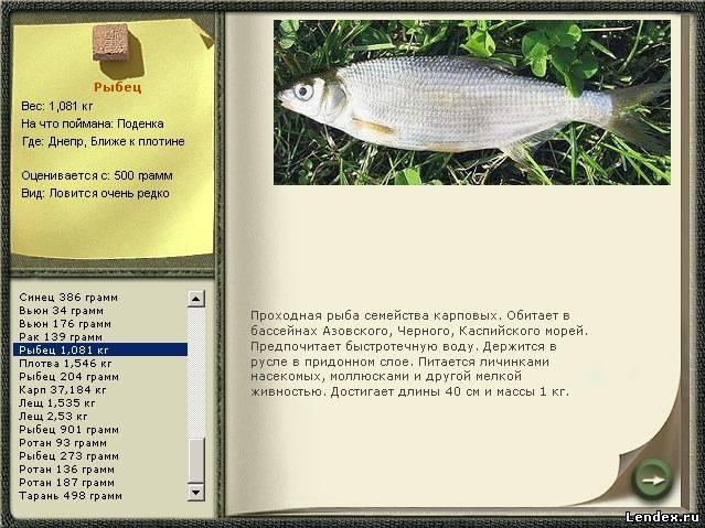 сколько стоит квота на ловлю рыбы
