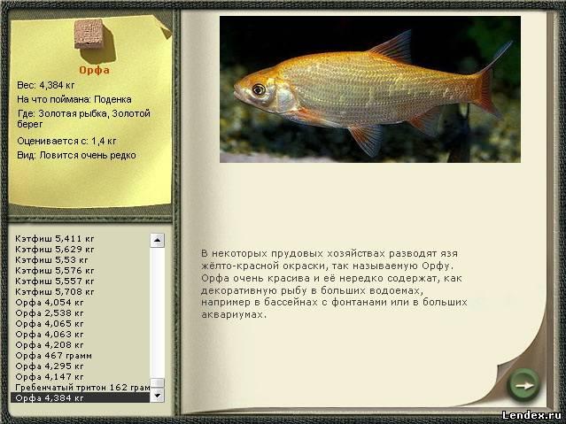 как ловить рыбу на поденку