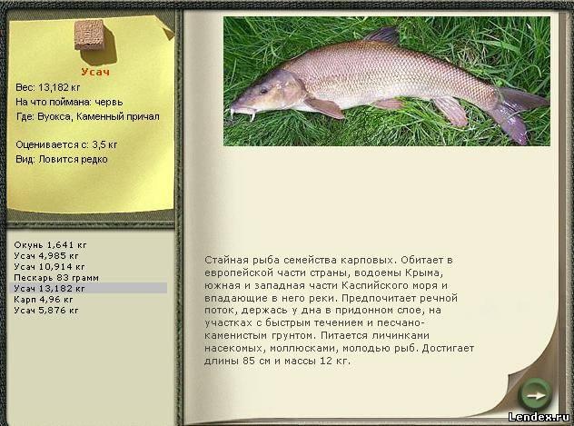 на что можно ловить рыбу в реке волге