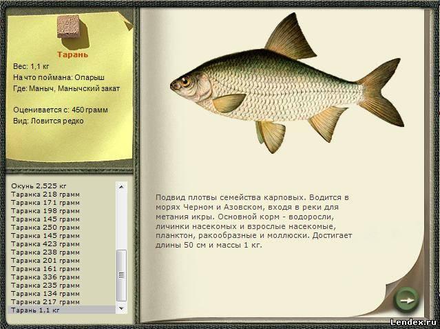 наживка для тарани на азовском море