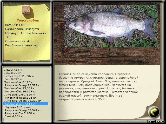как и на что ловить толстолобика и белого амура