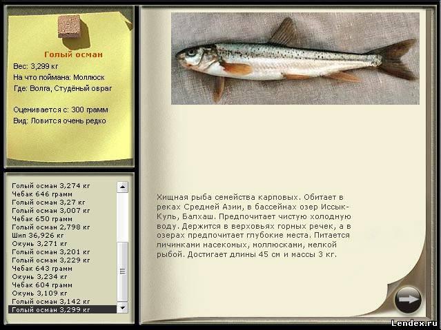 Русская рыбалка пыжьян голый осман