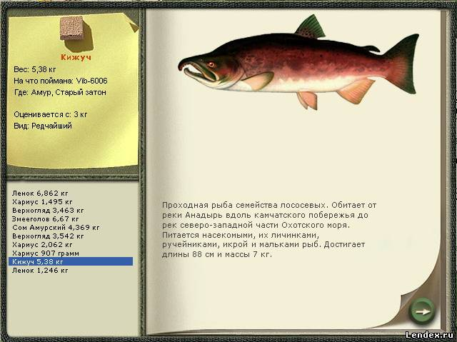 Русская рыбалка 2 подкаменая тунгуска радужная фмрель