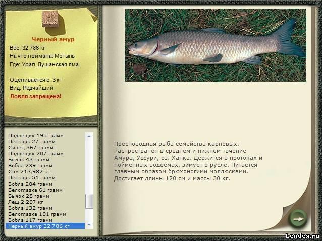 на что ловить рыбу меч на черном море