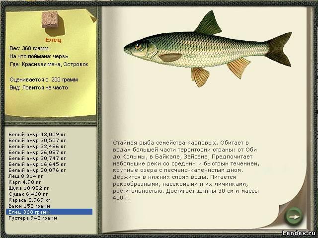 прогноз рыбалки в чердыни
