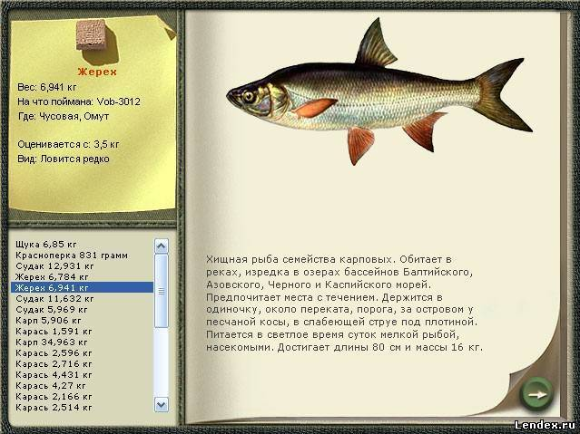 где кто ловит рыбу