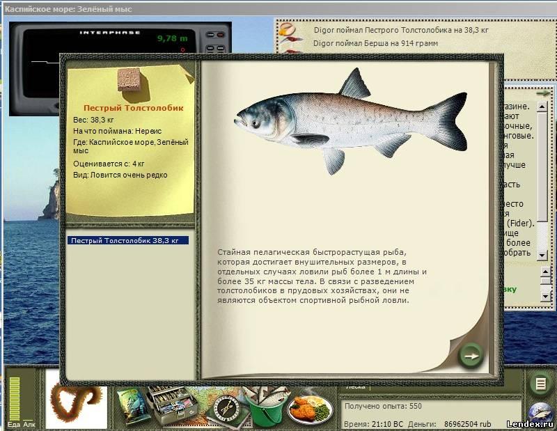 рыба пеструшка и на что ее ловят